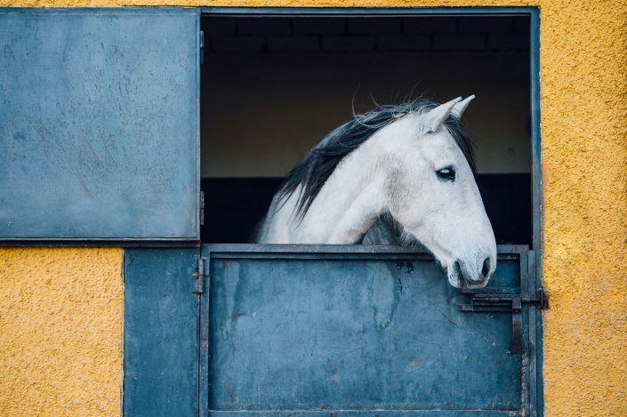 Fotos Pferde In Der Natur I In 2020 Pferde Fotografie Pferde