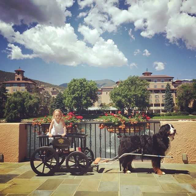Meet TJ, The Broadmoor Gallery dog! He loves giving wagon rides around Cheyenne Lake and receives hugs and treats from the children!