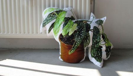15x Eucalyptus Huis : Nienke sybrandy product design pinterest