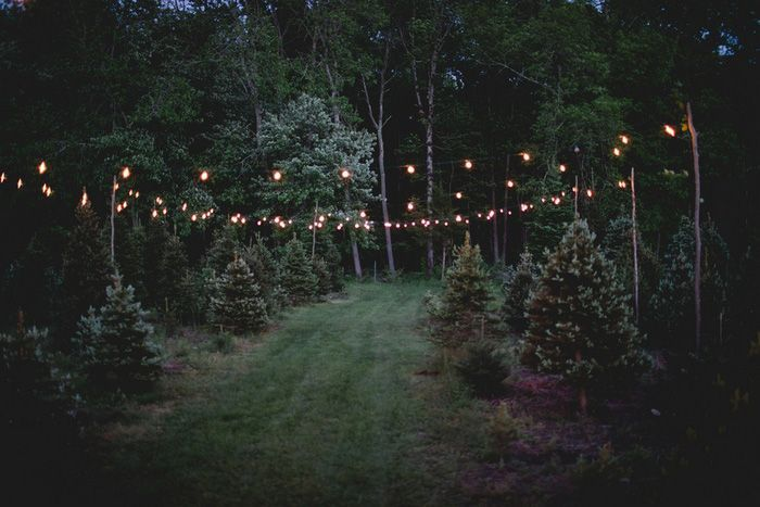 Intimate $5,000 Tree Farm Wedding in Connecticut: Kristina ...