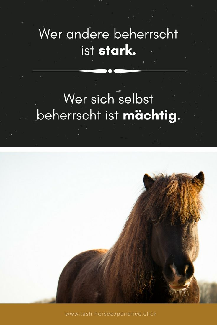 Quote Weisheit Weisheiten Fur Pferdemenschen Pferdeblog Personlichkeitsentwicklung Pony Im Sonnenschein Pferde Zitate Pferd Weisheiten
