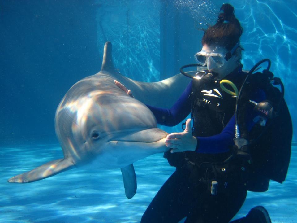 marine biologists if i do this i wanna study dolphins eels crabs - marine biologist job description
