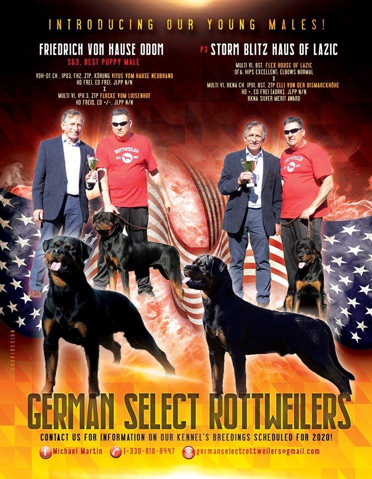 Acdacres Perth Breeder Of Australian Cattle Dogs Blue Heelers Austrailian Cattle Dog Australian Cattle Dog Blue Heeler Blue Heeler Dogs