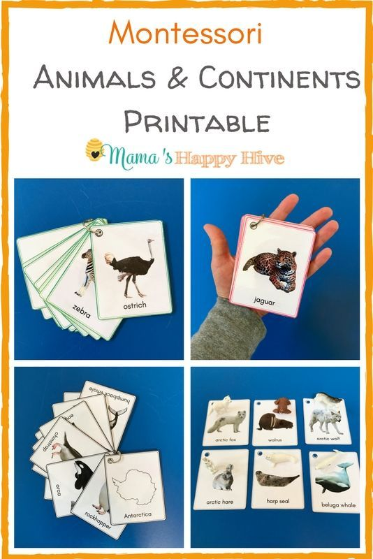 Montessori Animals and Continents Plus an Amazing Printable Bundle is part of Montessori geography, Montessori lessons, Montessori, Montessori printables, Montessori activities, Montessori toddler - Included are several fun handson activities for learning all about Montessori animals and continents  Plus, an animal & continent printable bundle!