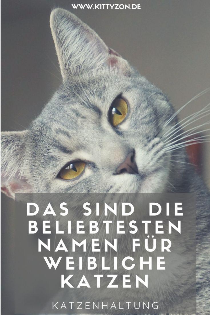 Pin Auf Nutzliches Zum Thema Katze Katzenhaltung