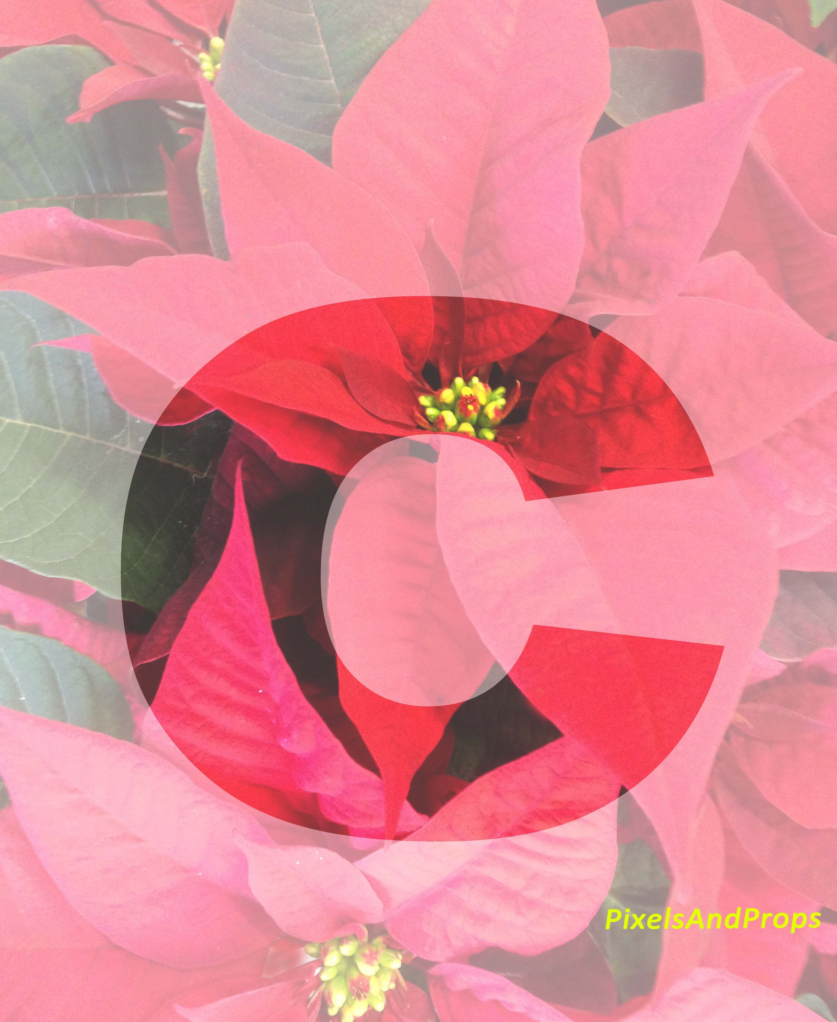 Lowercase letter c | #alphabet #typography #initial #monogram #font | Red Poinsettias | xmas | Christmas Decoration