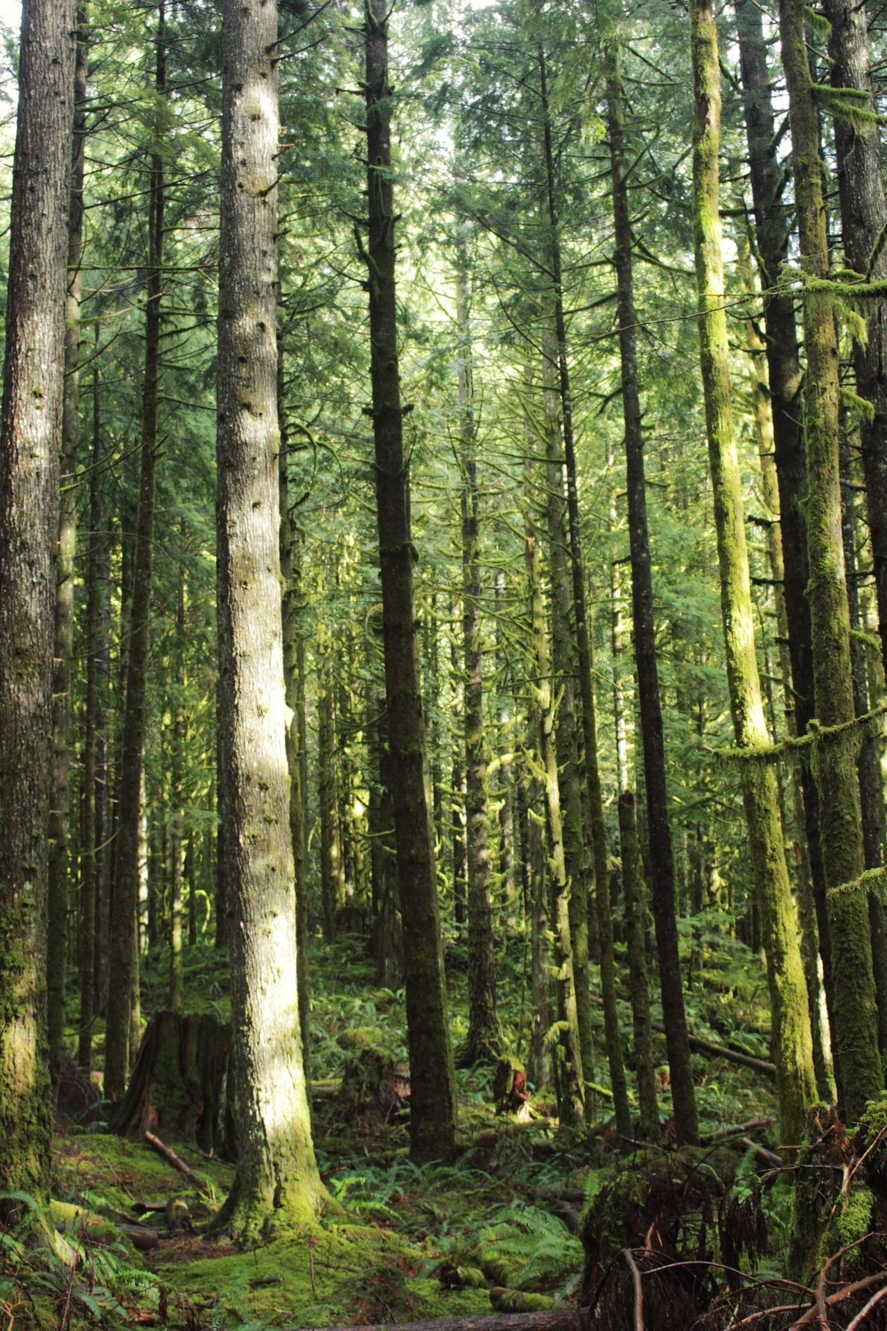 Sunny Forest Bc Forest Photography Nature Pictures Nature Backgrounds