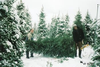 530 644 4731 Voted 1 Christmas Tree Farm In El Dorado County Located In The Apple Hill Region Of The Si Christmas Tree Farm Tree Farms California Christmas