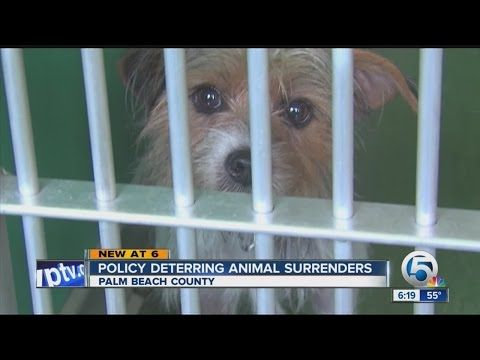 New Animal Shelter Rules Youtube Animal Shelter Animals Shelter