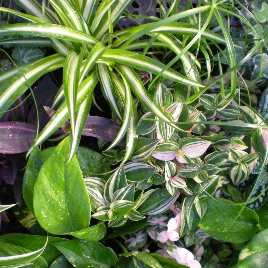 Jardins Bleus - Plantes d'intérieur