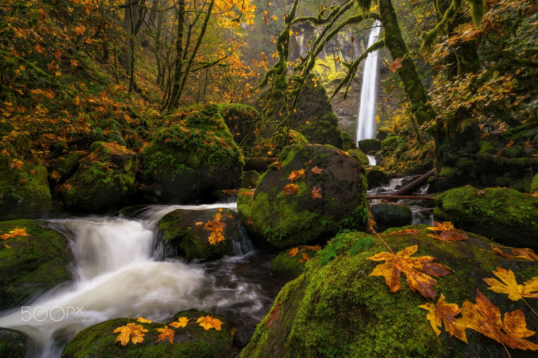 Elowah Mystery of Autumn - This image is of beautiful Elowah Falls looking through the veil of moss covered boulders sprinkled with maple leaves, moss covered branches and the warm atmosphere of Autumn.