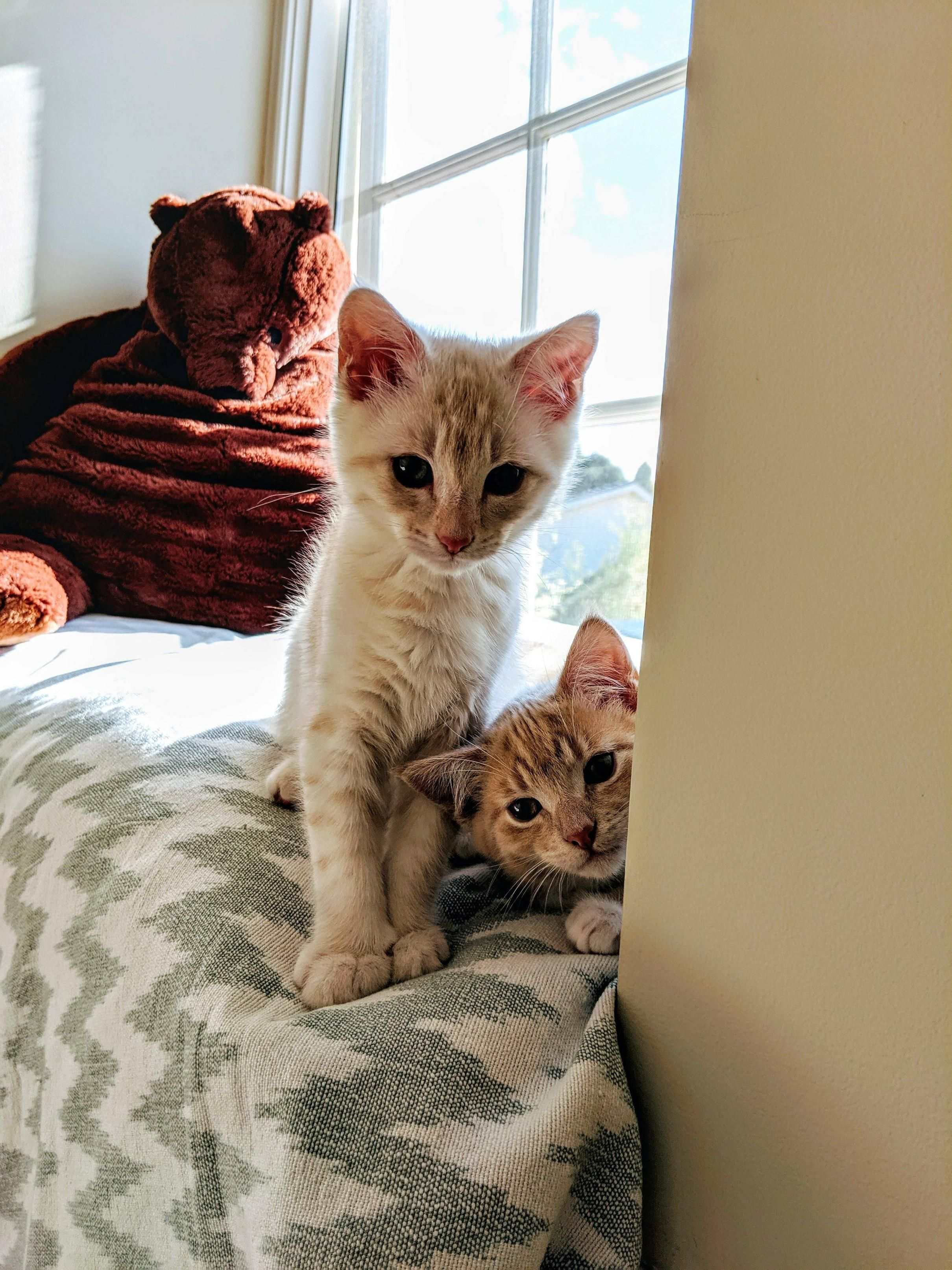 I Ve Loved Seeing Everyone Else S Little Ones Here Is Ghost And Boo Cats Feline Pets
