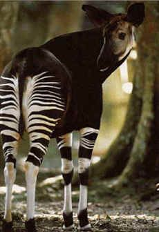 Amazon Rainforest Animals And Plants | Amazon+rainforest+animals+and
