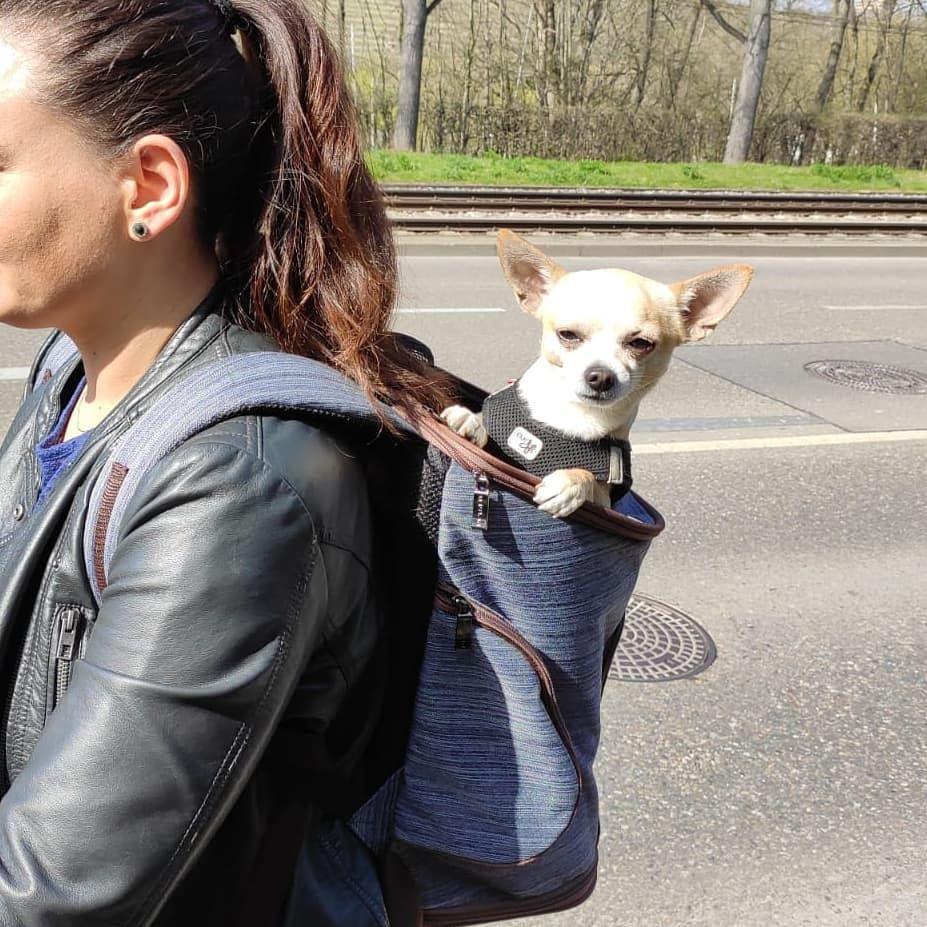 Chihuahua Lady