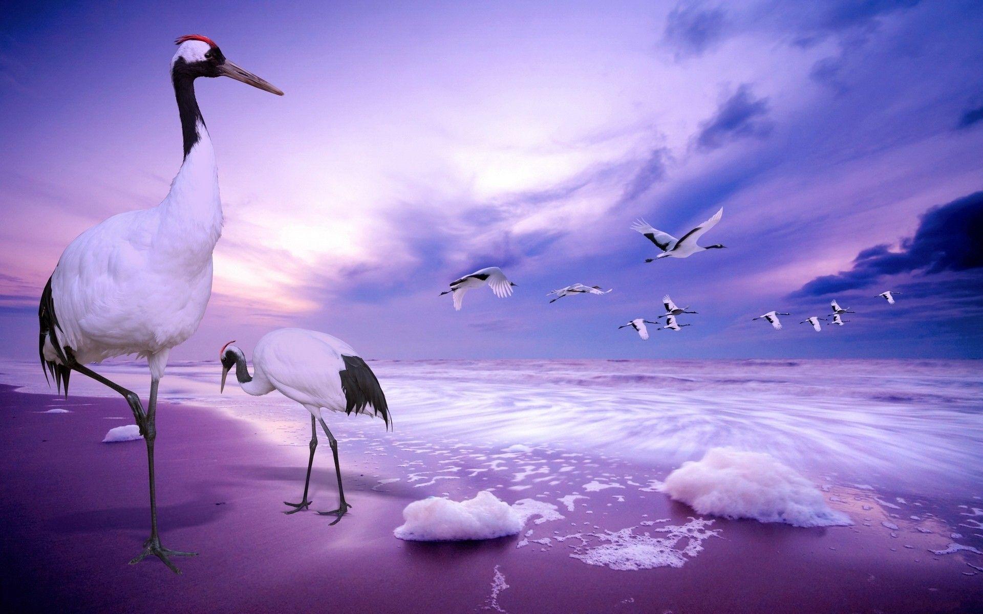 Cranes On The Beach Fotooboi Morskie Volny Pejzazhi