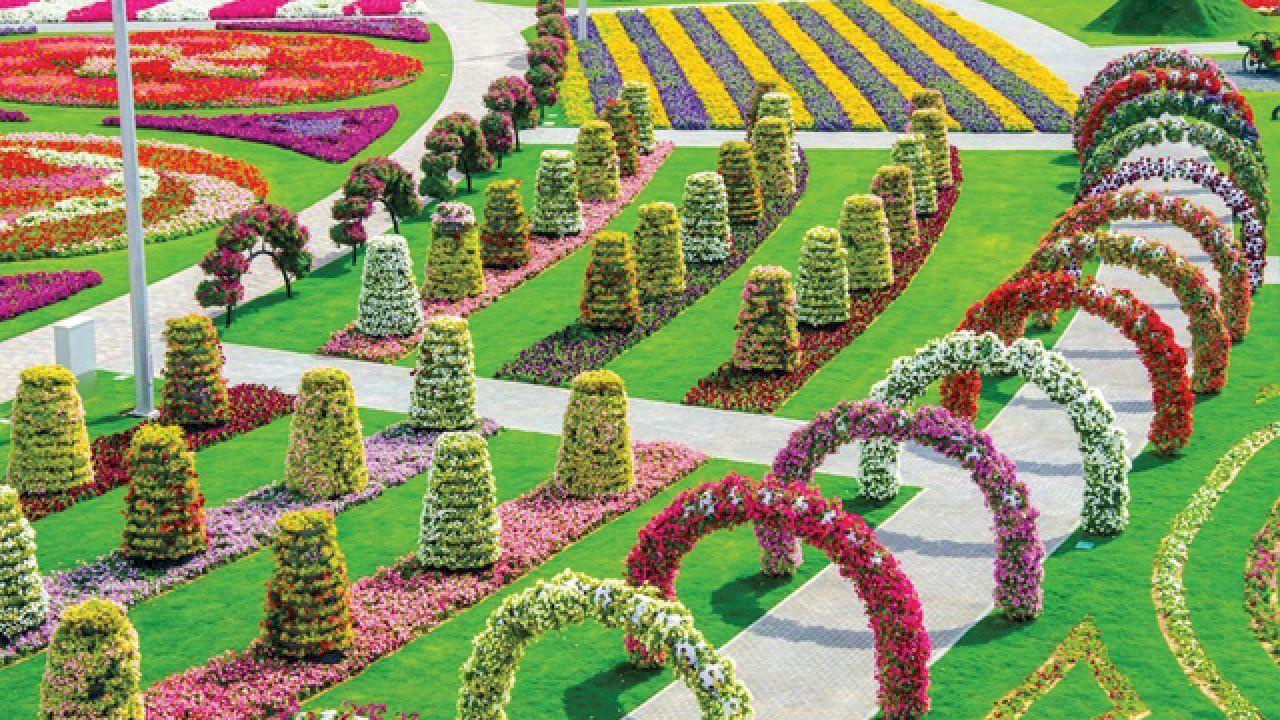 أين تقع حديقة الزهور في دبي Miracle Garden Beautiful Flowers Garden Most Beautiful Gardens