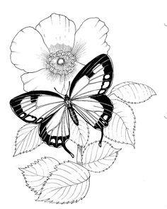 Kolay Kelebek Cizimleri Boyama Sayfalari Adult Coloring Pages