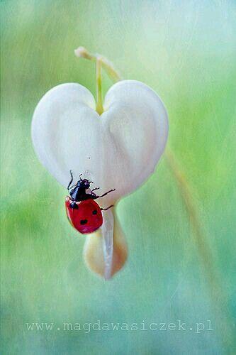 olha a jo de novo lady bug lady bug pinterest marienk fer gl cksk fer und niedliche tiere. Black Bedroom Furniture Sets. Home Design Ideas