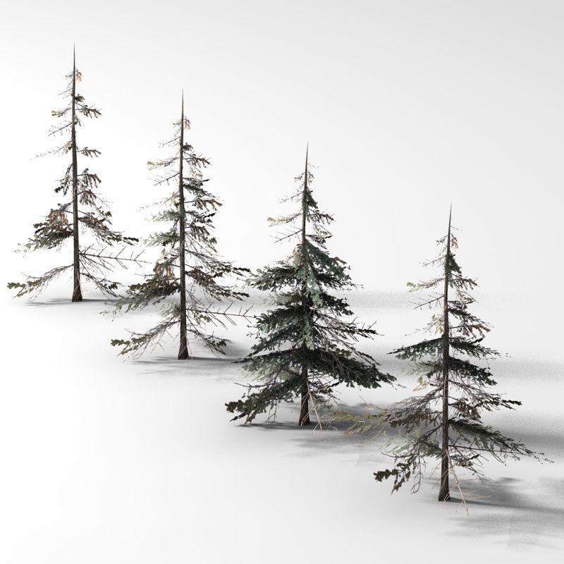 Xfrogplants Brewer Spruce 3d Model Tree Drawing Tree Drawings