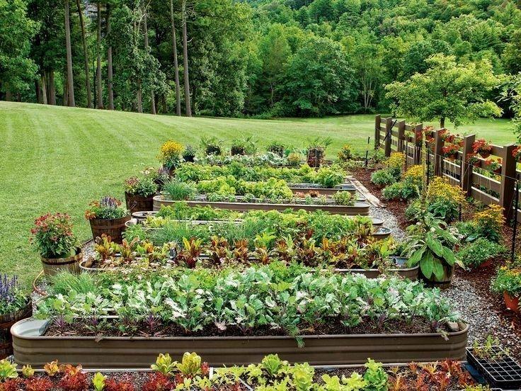 Big Vegetable Garden Home Vegetable Garden Front Garden Design Organic Vegetable Garden