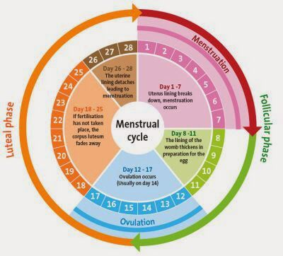 Pin on Beauty & Health Menstrual Cycle Calendar Graph