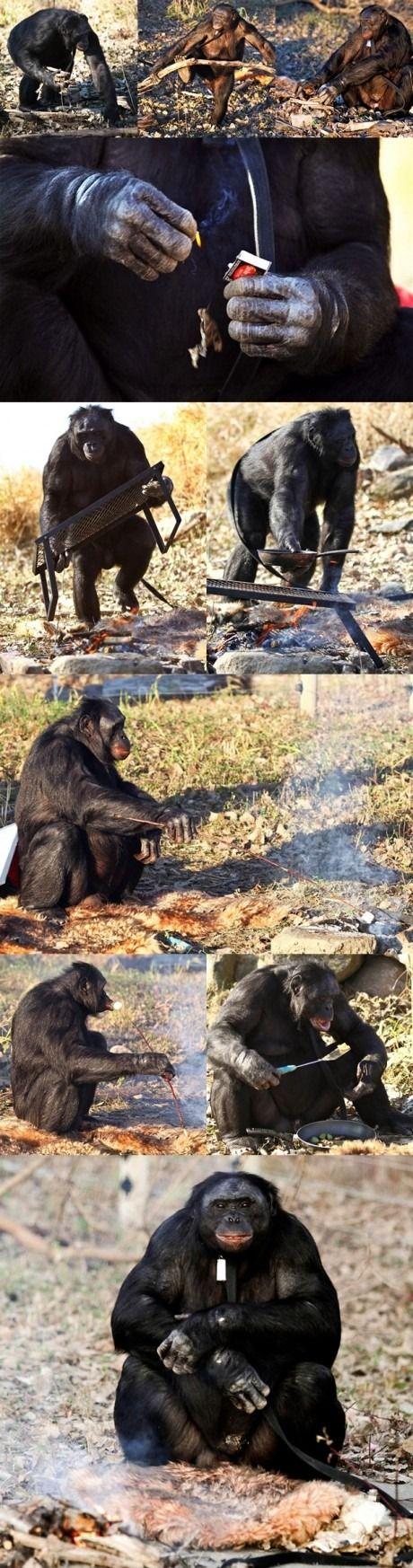 Bare en chimpanse belysning en brand og madlavning et