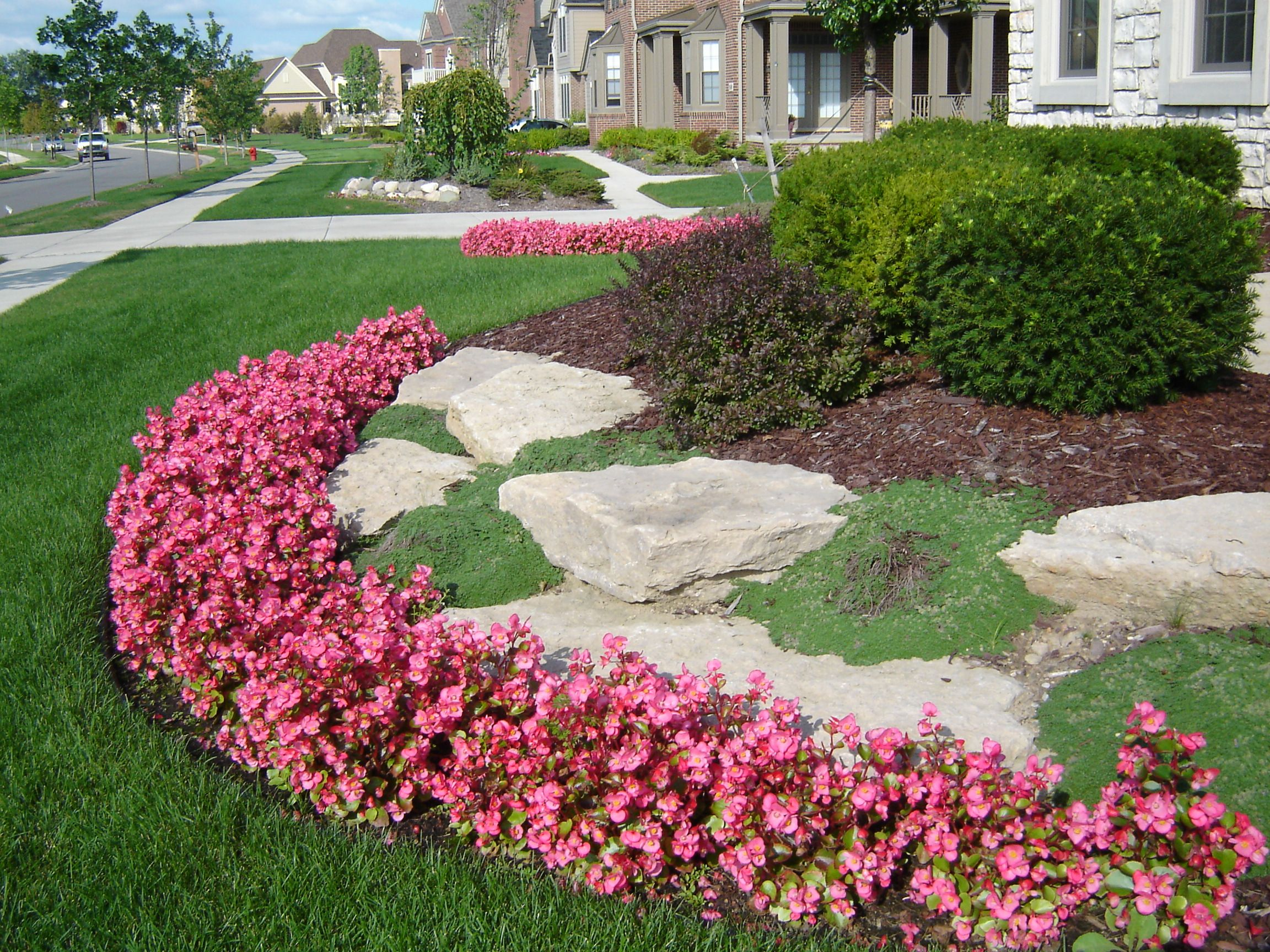 begonias, creeping thyme and limestone. | landscaping | pinterest
