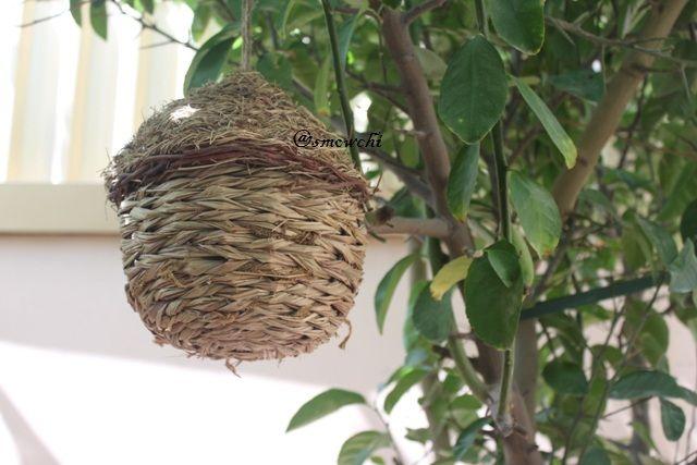 nest of bird..