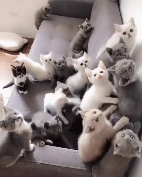 The undivided attention of a pack of kittens.