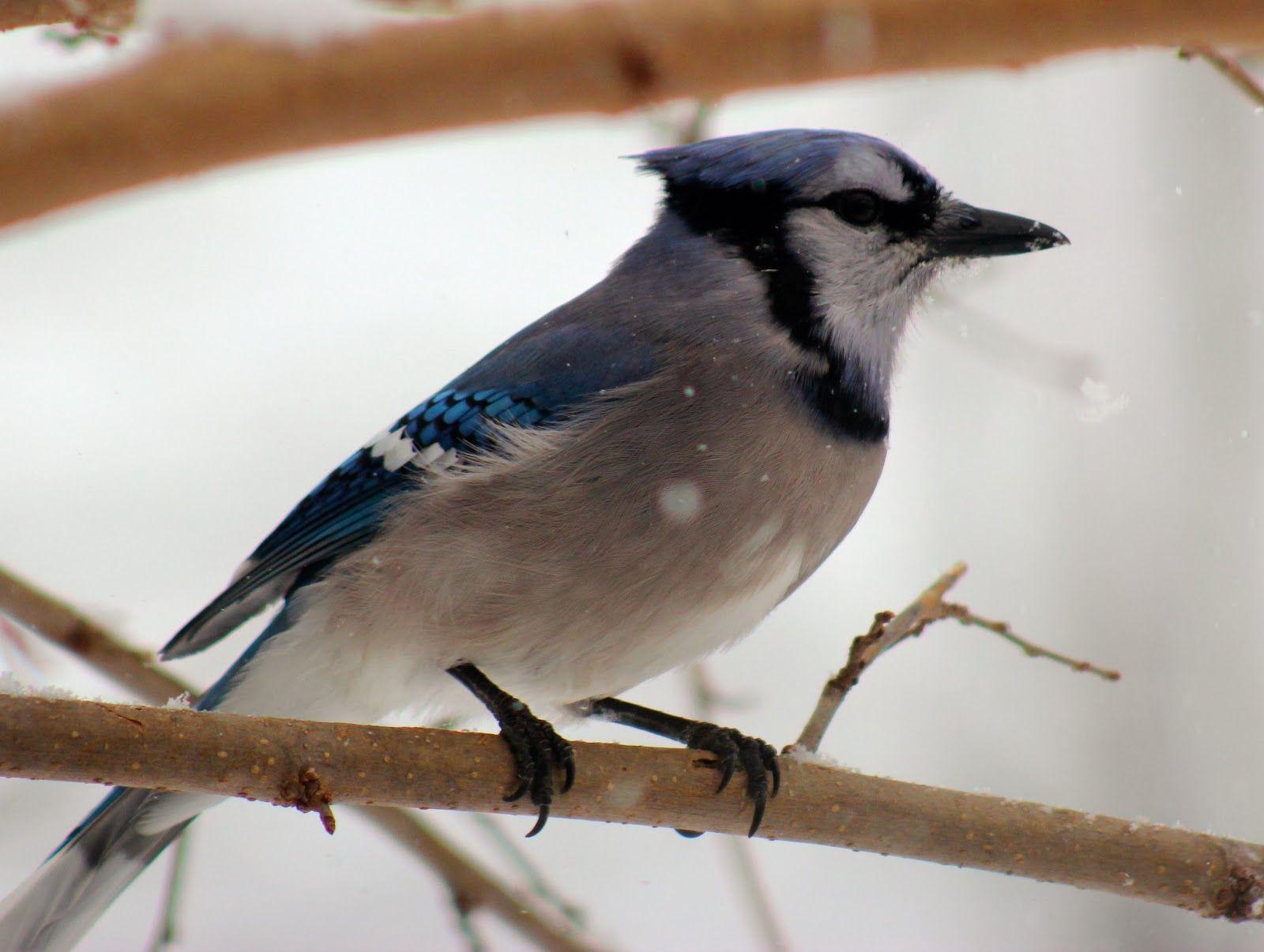 Don't To Feed Birds in Winter Feeding birds in