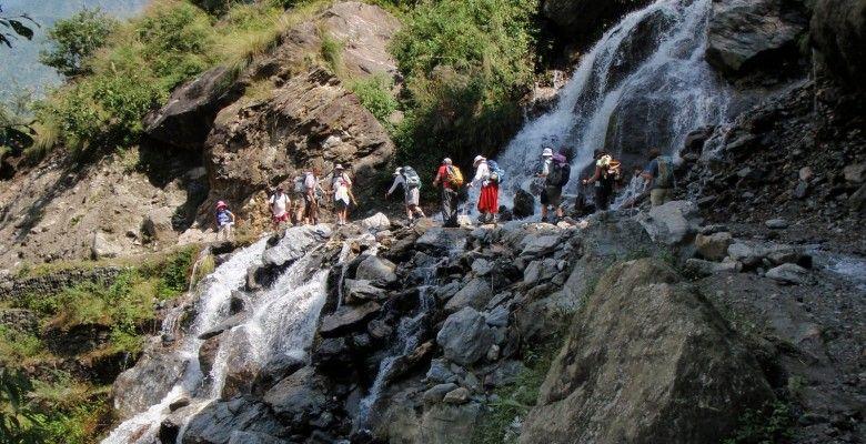 Langtang Trek Alpine forest, Nepal trekking, Trekking