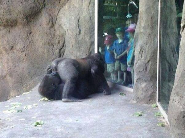 12 WTF Things You Might See At The Zoo in 2020 Funny