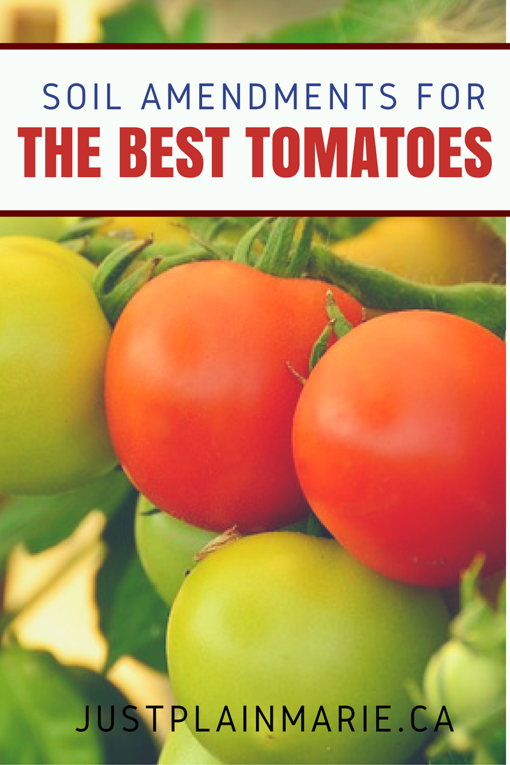 Soil Amendments For Tomatoes – Grow Them Bigger Better 400 x 300