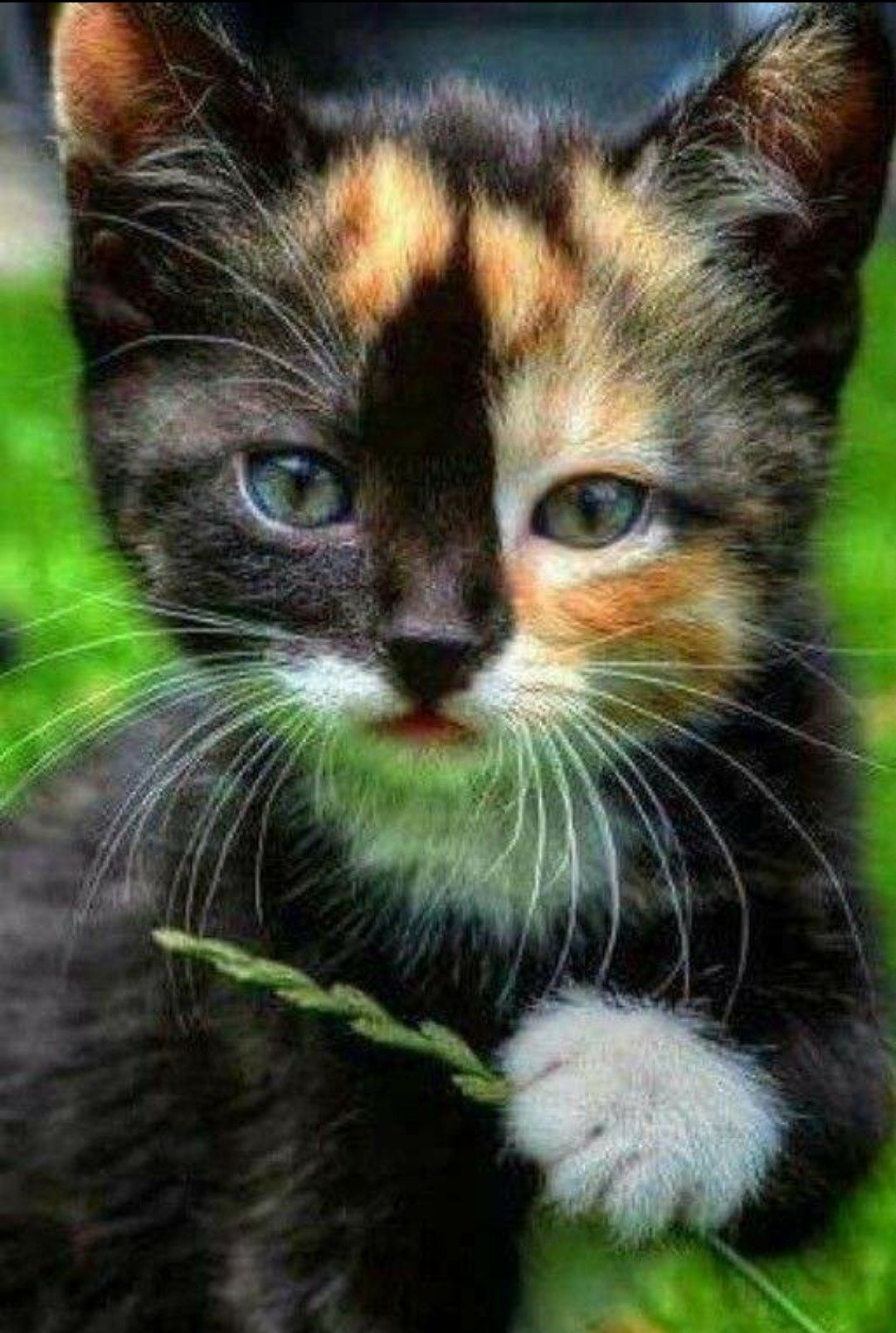 What a cool looking cat Kittens cutest, Cute cats, Cute