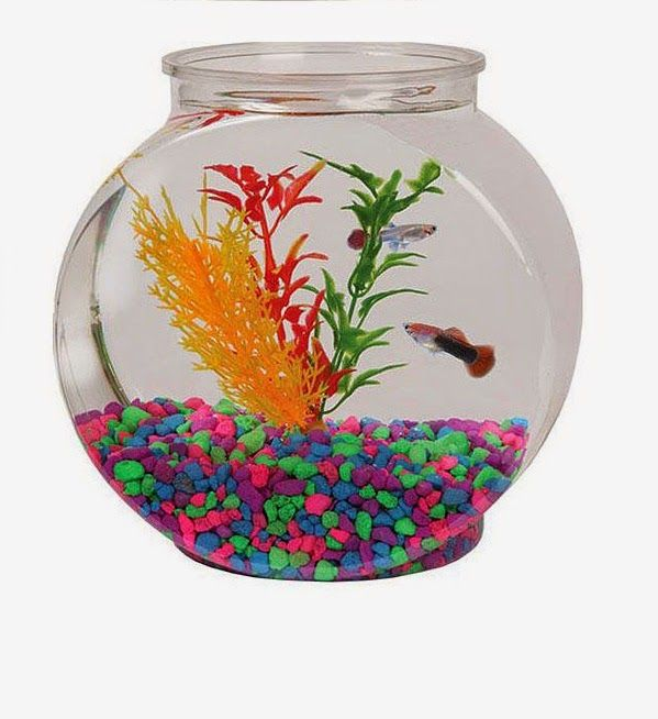 Decorative Fish Bowls Extraordinary Decorative Fish Bowl Decorations Ideas Fish Bowls Rocks Glass