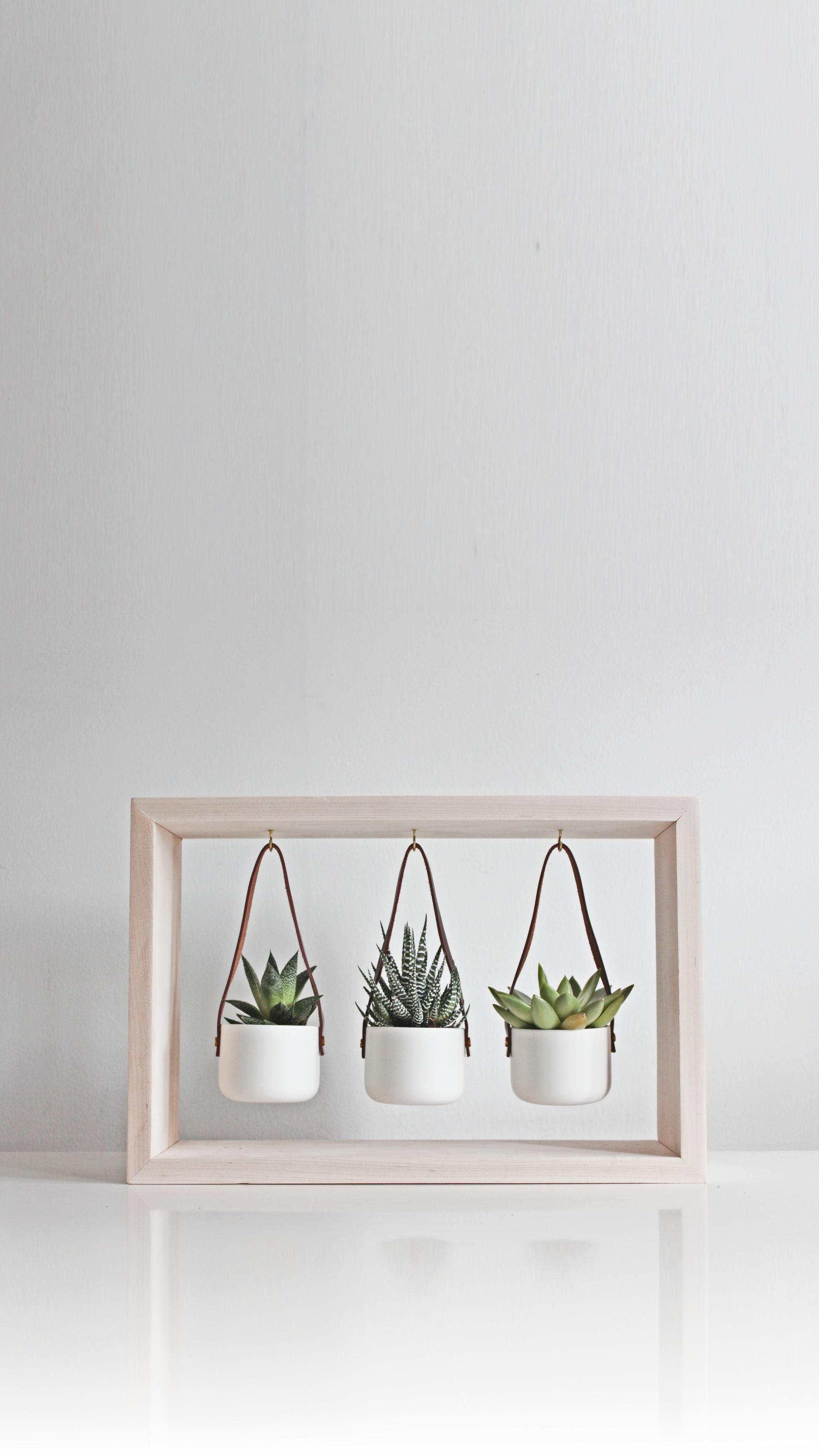 Photo of Indoor Succulent Planter