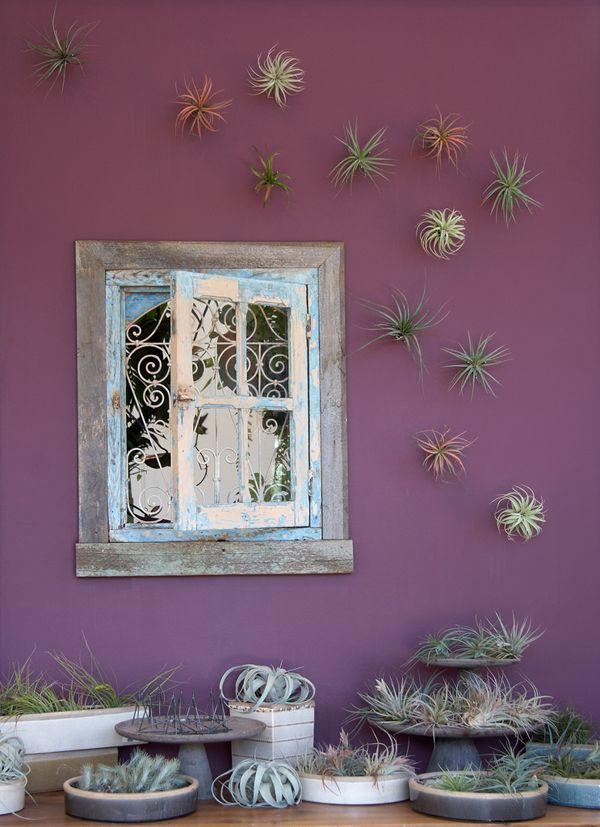 mur avec filles de l 39 air plantes d co ext rieur pinterest air plants plants and gardens. Black Bedroom Furniture Sets. Home Design Ideas
