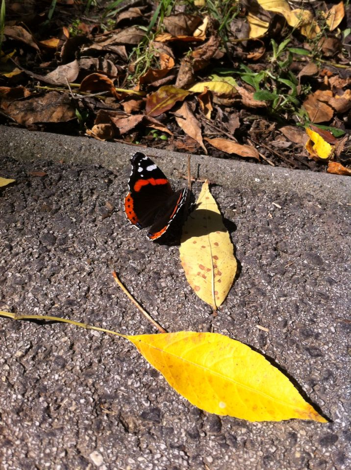 Butterfly (My photo )