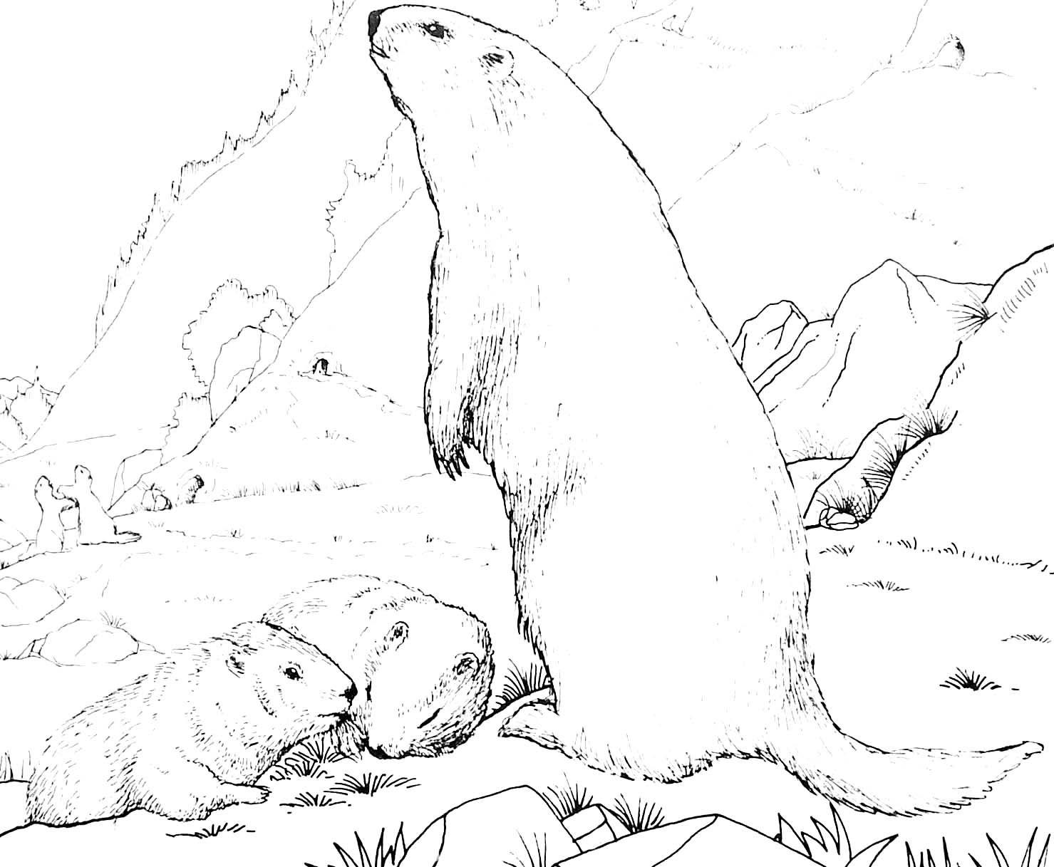 Coloriage de marmotte et ses petits avent pinterest coloriage marmotte and dessin - Coloriage marmotte ...