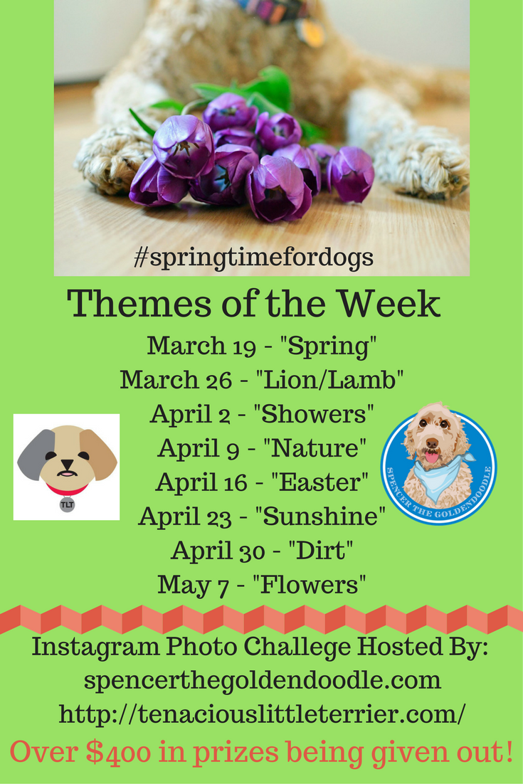 Mr.N from Tenacious Little Terrier and Spencer the Goldendoodle are hosting an Instagram Spring Time Photo Challenge! We are giving away over $400 worth of prizes! Simply click on the photo to learn more.