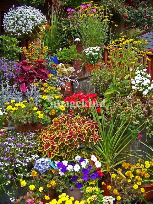 Colorful garden scene, some are perennials and some are not......beautiful landscaping scene!!