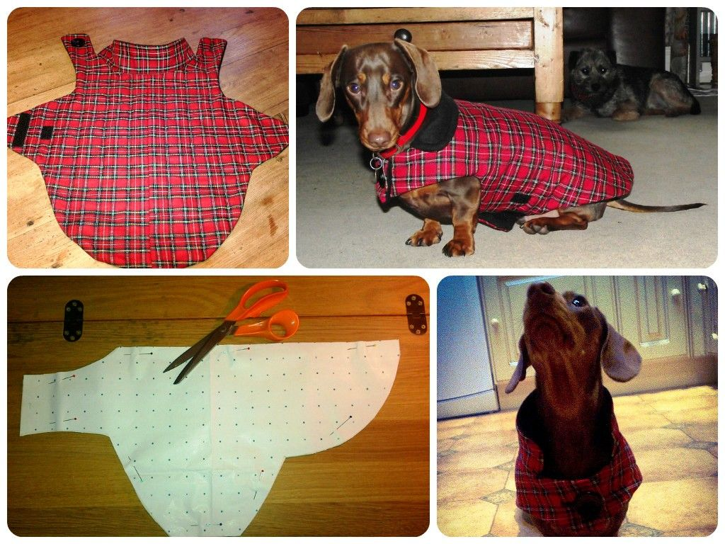 Diy Dog Coat I Adapted This Pattern For Leonard The Dachshund