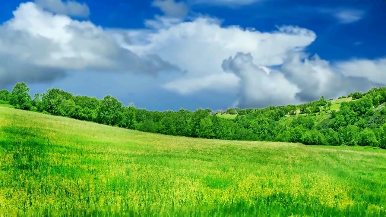 Hd 1080p Nature Grass Land Scenery Royalty Free Landscape Video 797
