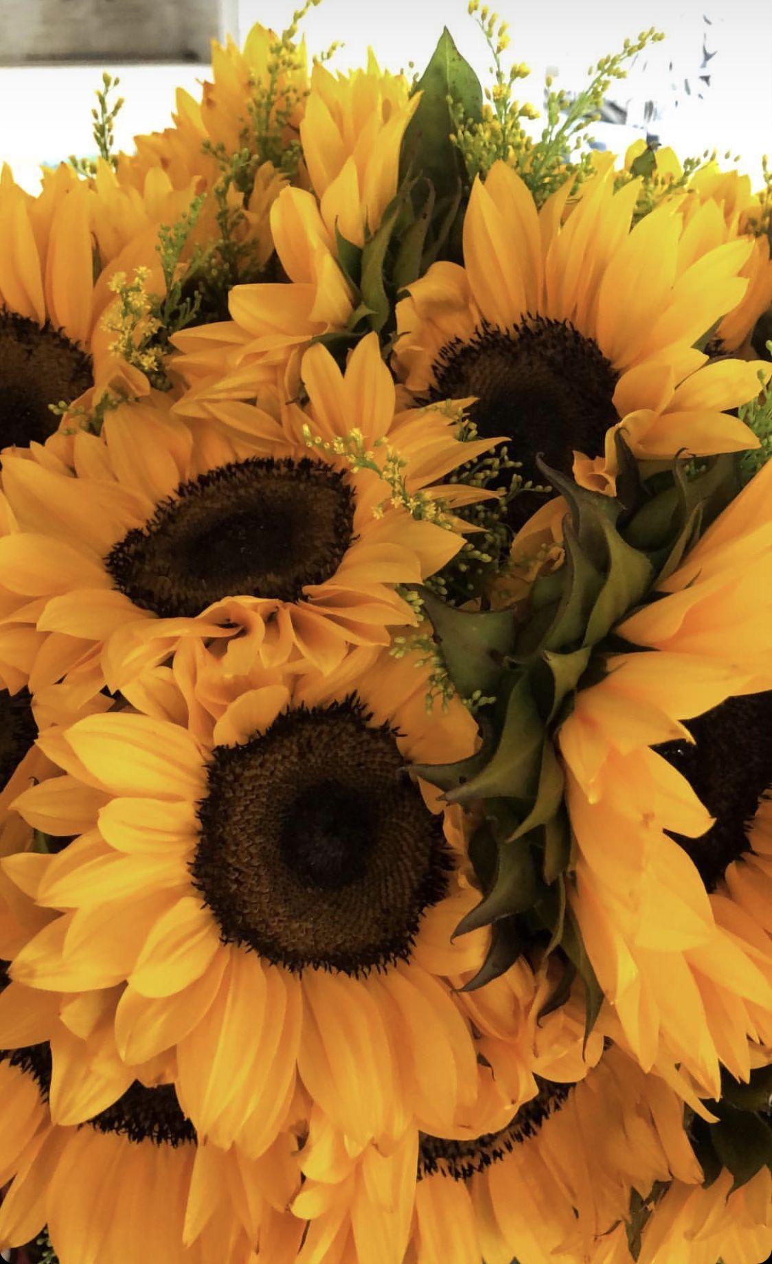 gillianvidegar Flower aesthetic, Sunflower wallpaper