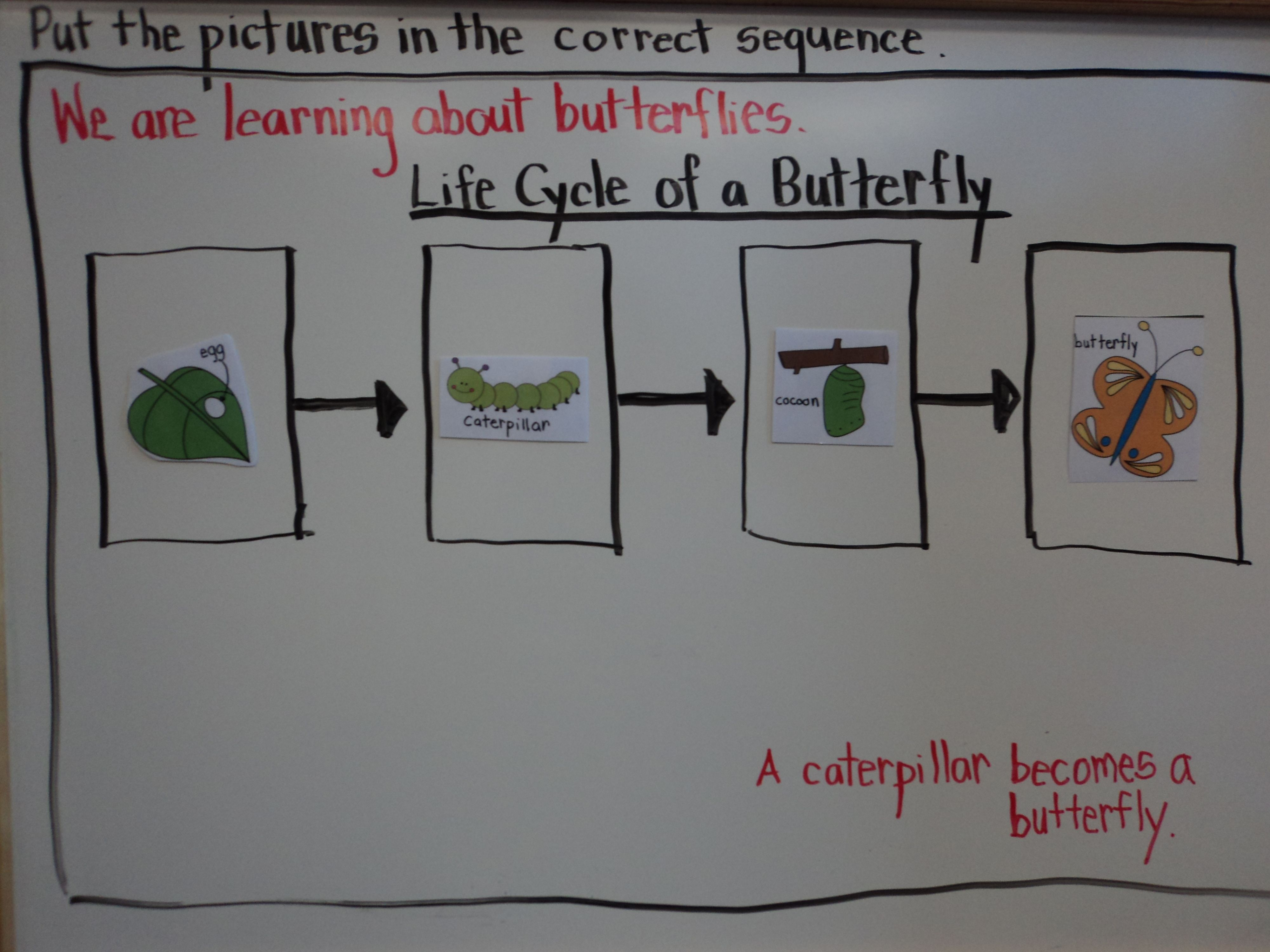 Life Cycle Of A Butterfly Magnetic Flow Map