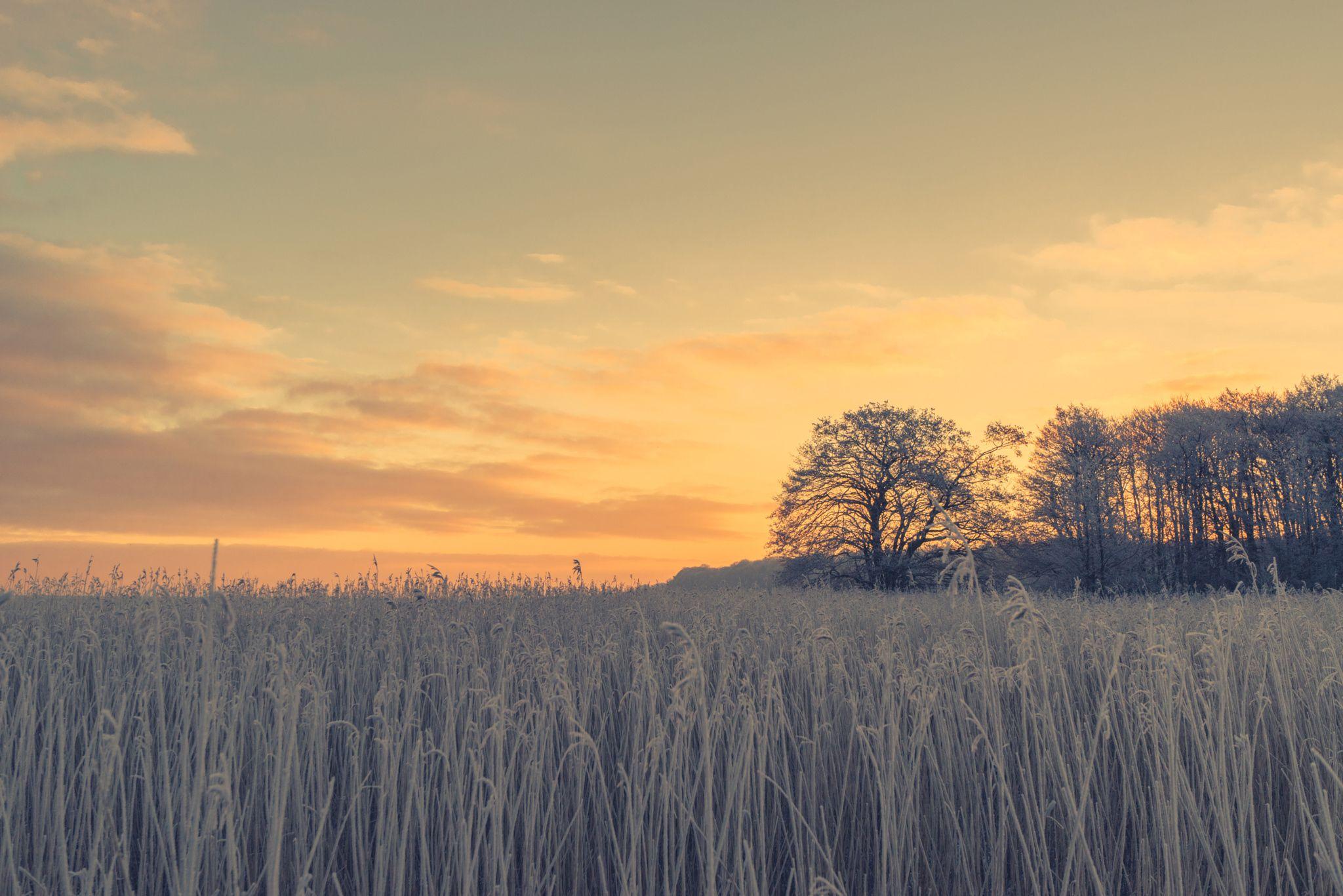 Countryside sunrise with a frosty field by Kasper Nymann on 500px