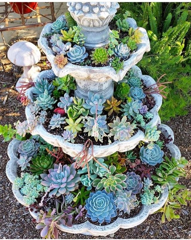 succulent fountain ideas  how to convert a fountain to a succulent garden