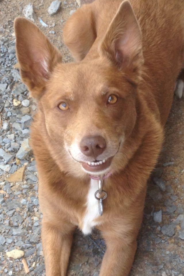Happy puppy big smiles red dog