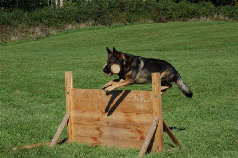 Http Www Germanshepherds Com Forum Attachments Trading Post Non