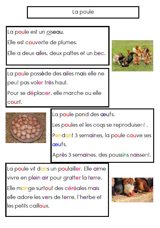 Populaire Documentaire : la poule | école | Pinterest | La poule  RJ58